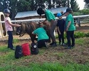 Pony Camps in Centurion